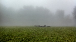 Fog covering the summit of Mount Yonah