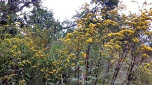 Wildflowers in bloom on Blood Mountain